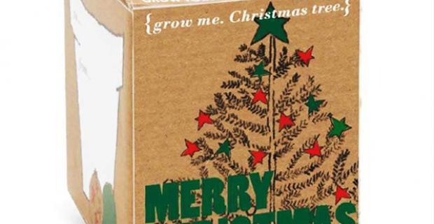 Vianočný stromček GROW ME. Vneste do vašich vianočných sviatkov trochu zábavy. Vypestujte si svoj vlastný vianočný stromček!