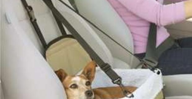 Taška do auta pre bezpečné a pohodlné cestovanie mačiek a psov v aute. Jednoduchá montáž a ľahká údržba.