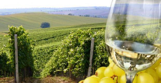Zahoďte obavy za hlavu a vydajte sa na juh Moravy spoznávať nádhernú scenériu viníc. Rodinný víkendový pobyt v penzióne U Krčků pri Brne.